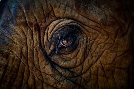Elephant Eyes Post